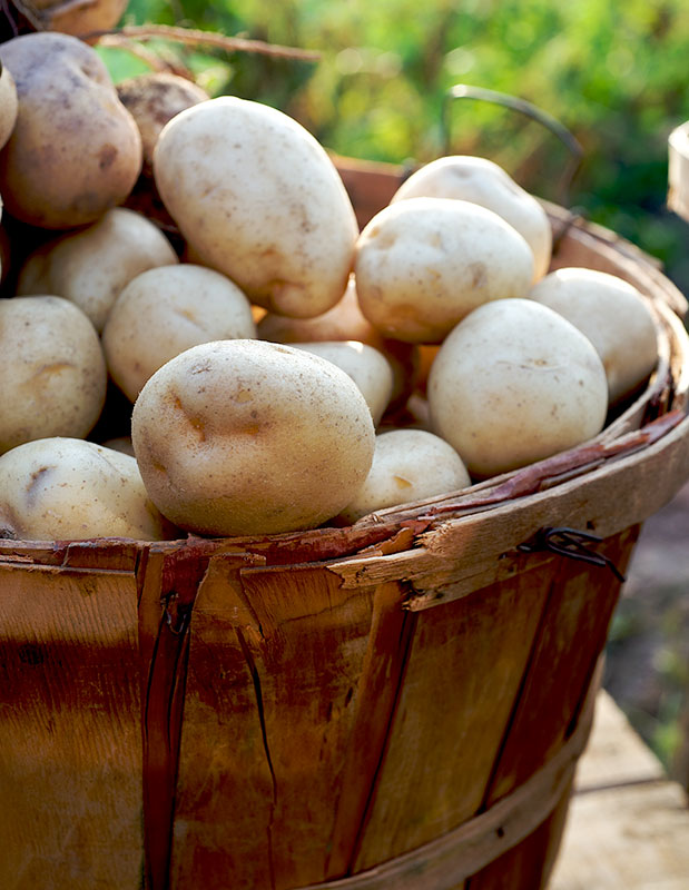 basket-potatoes